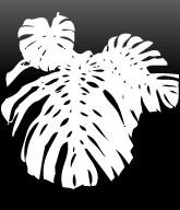 観葉植物・フラワーアレンジメント・お花「WORKSHOP A」